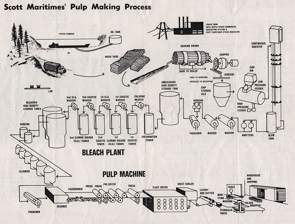 Chlorine-Free Pulp