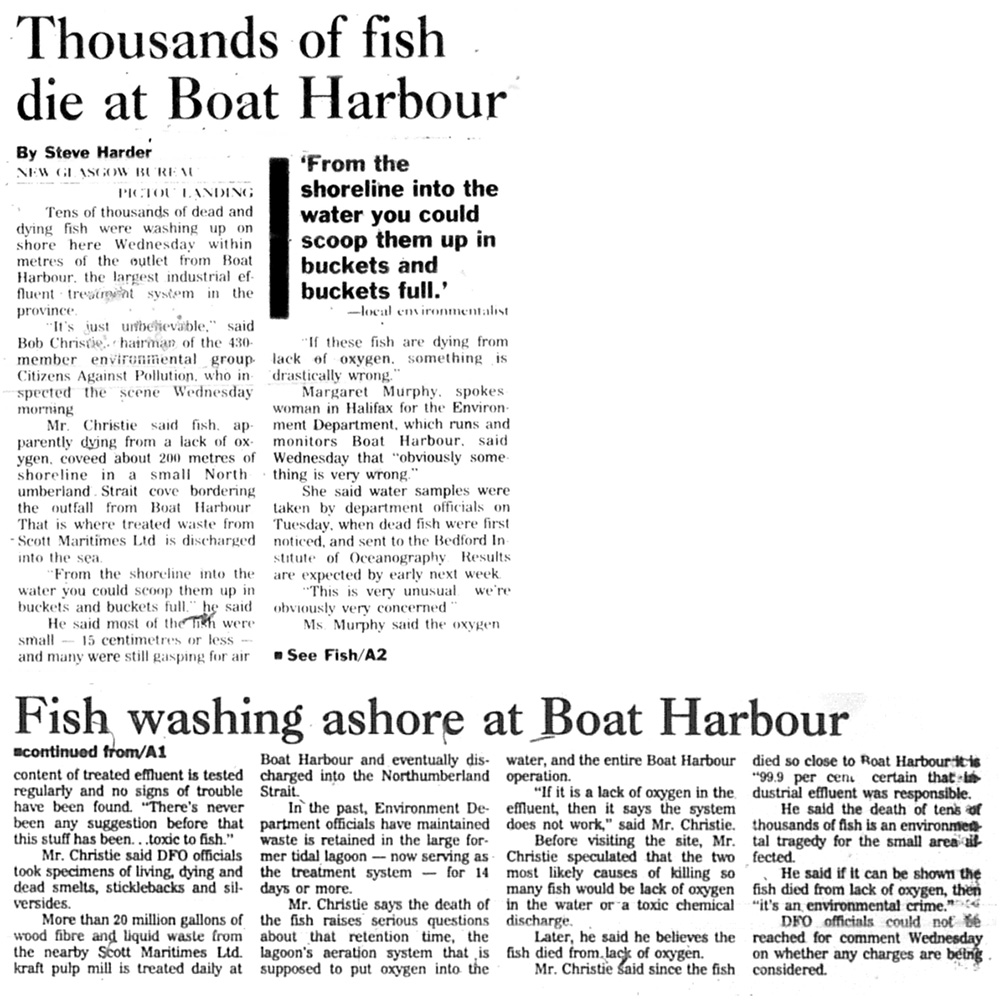 October 11: Thousands of Fish Die at Boat Harbour